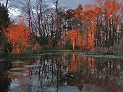 Last Blast (Deepgreen2009) Tags: trees light sunset orange home garden pond vivid shrubs lowsun lastlight
