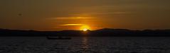 Night is coming (52weeks2016#14 - Night) (ponzoosa) Tags: sunset valencia night atardecer boat barca ship rice laguna navegar arroz albufera humedal 52weeks