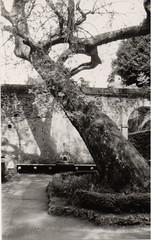 Tronco Villa d'este (Silmarbel) Tags: tronco villadeste