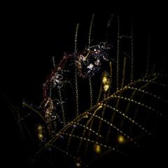 P3235231 (Jeannot Kuenzel) Tags: leica blue sea macro water port photography islands la mediterranean underwater alien under deep scuba diving canarias olympus malta el zen canary supermacro moods asph islas f28 45mm underwaterworld s2000 dg gomera 240z hierro underwaterphotography extrememacro ois jeannot inon macroelmarit underwatercreature kuenzel z240 maltaunderwater underwatermacro underwateralien supermacrophotography ucl165 wwwjk4unet jk4u epl5 maltaunderwatermacro maltaunderwaterphotography bestmaltaunderwaterpictures maltamacro maltascubadiving underwatersupermacro jeannotkuenzel aliensofthedeepblue superextrememacro aliensofthesea