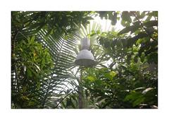 Vksthusene, Aarhus, Denmark (2015) (csinnbeck) Tags: light tree green lamp denmark haze fuji palm have vegetation tropic aarhus botanisk 2015 x100 vksthuset vksthusene