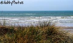 Et des vagues de dunes pour arrter les vagues (Le plat pays) (hobbyphoto18) Tags: mer plant france nature plante landscape pentax horizon dune wave northsea paysage vague nordpasdecalais dunkerque merdunord k50 marehaute oyat leffrinckoucke pentaxk50