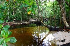 Parque Nacional Cahuita (K.Koehnke) Tags: costa nationalpark carribean rica cahuita parquenacional karibik