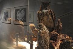 exhibition (_tess_) Tags: kunsthaus exhibition tess graz terrywinters dialogmitdernatur
