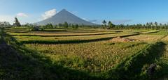 Mt Mayon panorama (Laura Jacobsen) Tags: volcano philippines mayon bicol luzon mtmayon legaspi legazpi bicolandia mayonvolcano