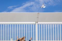 (yoriyas) Tags: street sky music woman france marseille hand pigeon ngc streetphotography muse morocco fujifilm leila sureal magnum freedoon inpublic magnumphoto alaoui yoriyas yoriyart yassinealaoui