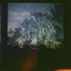 Taz is taking to the sky (lauraesgro) Tags: light sleeping sky dog tree film clouds flying lomo twilight exposure singing dancing dusk crying double leak 120mm