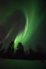 Finland 2016 (Marianne Zumbrunn) Tags: winter light green finland nikon finnland lappland aurora lapland f28 northernlights auroraborealis 2016 d610 northernlight 14mm samyang samyang14mm nikond610