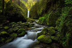 Deep in the forest (Wind Walk) Tags: fall oregon creek river waterfall moss columbia grotto gorge mossy ruchel