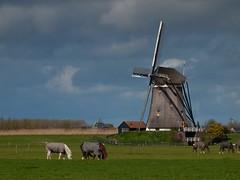 Windmill near Zoetermeer (hansdjong) Tags: netherlands nederland windmills zoetermeer molens zuidholland