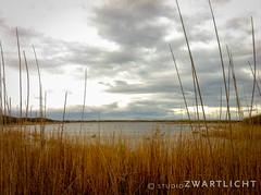 Nature reserve the Rietplak (uiltje) Tags: birds waddenzee vogels naturereserve ameland waddeneilanden natuurreservaat rietplak iphonegraphy