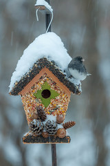 seed house (jimmy_racoon) Tags: winter snow canon is birdhouse mk2 5d snowfall 70200 junko darkeyedjunko f4l darkeyed 70200f4lis canon5dmk2