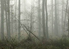 The grey mist (vertblu) Tags: wood november autumn mist fall misty fog forest woodland woods hamburg foggy naturepreserve naturschutzgebiet inthewoods densefog hamburggermany heavyfog duvenstedterbrook preservationarea fogandmist preservearea nsgduvenstedterbrook vertblu