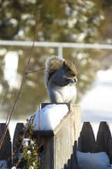 Squirel on the Birdhouse (Tomsde) Tags: nature garden birdhouse squirel