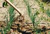 Farm Passion (Fabrizio Iannaccone) Tags: farm hoe passion land photo zappa passione per la terra coltivare campi nikon pianta grass erbs paesaggio campo erba
