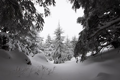 in the forest. (jrseikaly) Tags: winter lebanon snow tree forest jack photography god cedar bible arz cedars seikaly jrseikaly
