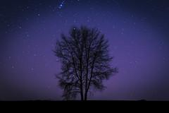 Nuit toile (Cerca_Trova) Tags: sky tree nature night pose stars landscape long exposure space ciel paysage nuit arbre espace toiles valenciennes longue