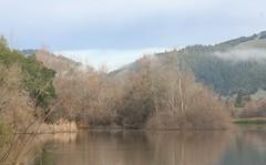 Spring Lake January Morning (brian dean bollman) Tags: sonomacounty riparian springlake springlakecountypark