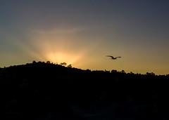 Sunrise over Mt. Soledad (Chimay Bleue) Tags: bird sunrise la san mt diego mount soledad jolla