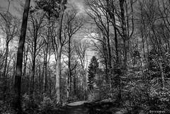 Im Wald # 100_0057 # Nikon D80 - 2007 (irisisopen f/8 >3Mio) Tags: color digital nikon d farbe d80 irisisopen