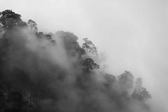 Chicaque Mist forest I Colombia (Javier Zapatero) Tags: blackandwhite naturaleza mist blancoynegro forest blackwhite nationalpark flora colombia bogot bosque ecologa chicaque parquenacional airelibre biodiversidad bosquedeniebla mistforest