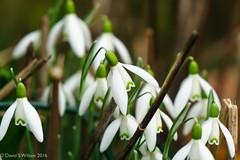 Life Returns (David S Wilson) Tags: england flower ely flowersplants 2016 zeisslens davidswilson 1670mmf4 sonyilce6000 adobelightroom6 zeissevariotessar41670za