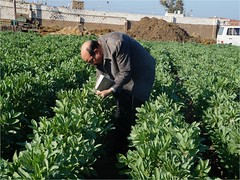 Picture7 (ICARDA-Science for Better Livelihoods in Dry Areas) Tags: farmers northafrica climatechange mena pulses ifad nutrition resilience drylands icarda incomes westasia croprotation seedsystems conservationagriculture euifad wheatlegumecroppingsystems
