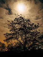 a_full_moon_night (Joerg Esper) Tags: trees cloud moon tree night clouds de landscape deutschland mond nightshot cloudy nacht wolke wolken olympus landschaft bume baum rheinlandpfalz vollmond wolkig plaidt bewlkt olympusomdem1 olympusmzuikodigital17mm118