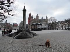 2016-0116 (schuttermajoor) Tags: maastricht nederland hond che 2016 airedaleterrier ommetjenederland