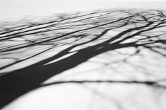 Les ombres de mars/March shadows/Mars skuggor (Explore) (Elf-8) Tags: winter shadow blackandwhite snow abstract tree contrast
