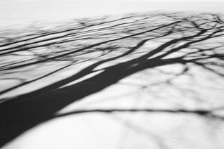 Les ombres de mars/March shadows/Mars skuggor (Explore)
