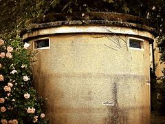 Miss Robinson (Isabelle Gallay) Tags: city flowers urban nature face wall fleurs 33 bordeaux mur ville visage urbain aquitaine gironde pareidolie