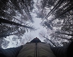 Virgin forest (Alexandr Tikki) Tags: world wood travel trees winter wild sky people white holiday plant cold tree art classic me nature beauty forest wow wonder idea amazing view outdoor air awesome great creative dream ukraine best hero dreams imagine unusual concept impressive tikki gopro goprohero4 alexandrtikki leveltravel