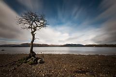 Milarrochy Bay Tree (Tony N.) Tags: longexposure bw mountains tree clouds scotland europe lowtide loch nuages lomond arbre lochlomond vanguard montagnes ecosse basse mare poselongue d810 nd110 tonyn milarrochybay milarrochy nikkor1635f4 tonynunkovics