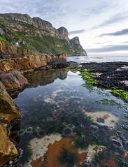 Anemone Pool (smee.bruce) Tags: southafrica atlantic naturereserve capepoint falsebay venuspool canon1740mml sonya7r