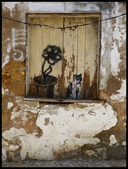 Lagos (abudulla.saheem (visiting Zhong-guo)) Tags: art portugal lumix kunst lagos panasonic graffito algarve abudullasaheem dmctz31 acatsittingonwindowsill einekatzeinderfensterbank