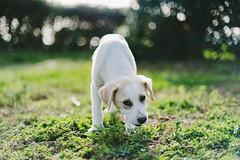 Loneliness (Little wanderer) Tags: dog bokeh doggy marsala d610 50f14