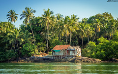 Konkanscape#2 (hardikboda) Tags: trees house green beautiful landscape alone outdoor ngc palmtree maharashtra backwaters konkan tarkarli malvan karliriver