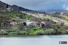 Riveira Sacra, Ourense (www.eidernet.com/eiderphoto) Tags: canon galicia ourense riveirasacra eos5dii makroplannart1002 zeiss100mpze
