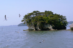 _DSC0372 (sayots) Tags: japan gull  matsushima miyagi