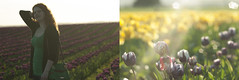 Tulip farms in April. (DeusXFlorida (10,211,658 views) - thanks guys!) Tags: seattle flowers red portrait green floral yellow spring nikon diptych northwest rich tulip april wa washingtonstate combo d60 richcolors nikond60 tulipfarms deusxflorida nikonandcarlzeisslens