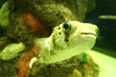 DSC03739 (emmanrog) Tags: peces animales marino acuario