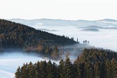 Wait (desomnis) Tags: wood trees winter mist nature misty fog forest woodland landscape austria landscapes haze woods nebel foggy mystical landschaft upperaustria mhlviertel landscapephotography seaoffog canon6d canon135mmf20 desomnis