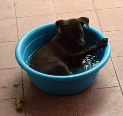 a lady bathing (the foreign photographer - ) Tags: our dog house water puppy thailand nikon bangkok bowl porch bathing bangkhen d3200 apr202016
