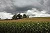 Corn Tassles (Alan Yahnke) Tags: ef24105mmf4 canoneos40d