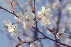 Tenderness (j.petruhina) Tags: flowers sky macro nature latvia