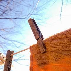 #beautifulday #sunnysunday #lovelylaundry #homestead #housework #laundryday #clothesline (Juliette_Adams) Tags: housework homestead clothesline laundryday beautifulday sunnysunday uploaded:by=flickstagram instagram:photo=65229647587427108346253686 lovelylaundry