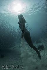 Rocket girl (bodiver) Tags: ocean silhouette hawaii ambientlight wideangle freediving rays reef fins kailua akule peopleunderwater baitball