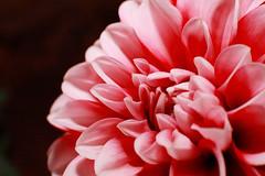 20160422_0011 (teufelkamera) Tags: flower macro tube extention kenko