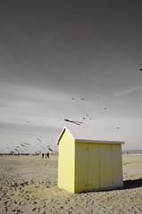 30mes Rencontres Internationales de Cerfs Volants (Nomie.R) Tags: kite color beach festival colorful kites plage cabane merdunord cerfvolant pasdecalais cabanon
